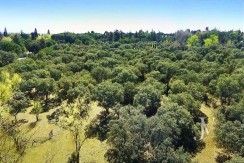 La Moraleja: Plot of 10.000m2 to build an independent house of 3.300sqm. Good location