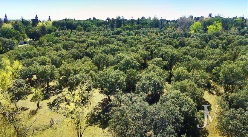 La Moraleja- Terreno de 10.000m2 para construir un unifamiliar de 3.300m2. Buena ubicación. 1
