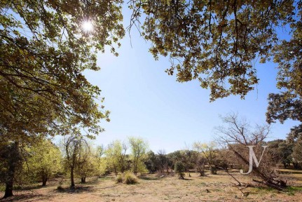La Moraleja: Plot of 20.000m2, in good location, possibility of building 1 or 2 houses