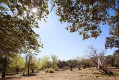 La Moraleja- Terreno de 10.000m2 para construir un unifamiliar de 3.300m2. Buena ubicación. 5